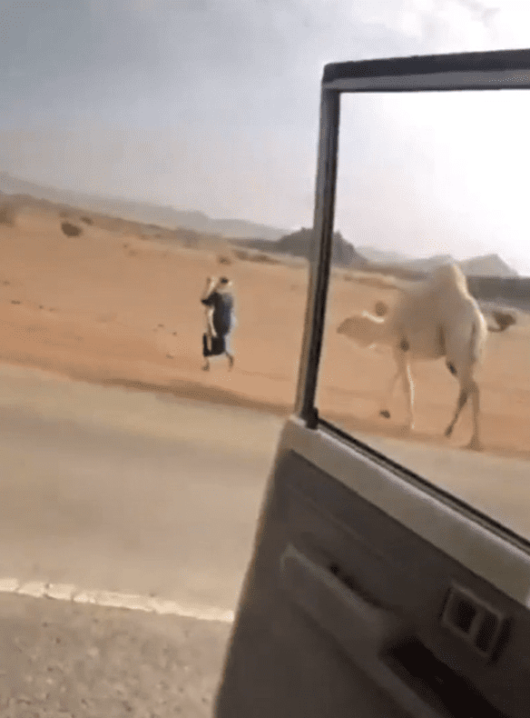 A man running with a baby camel in his arms as its mother runs after him. │Source: reddit.com/r/HumansBeingBros
