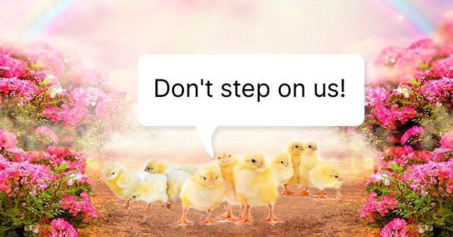 Daily Joke: Three Men Who Went to Heaven Were Told Not to Step on the Chickens