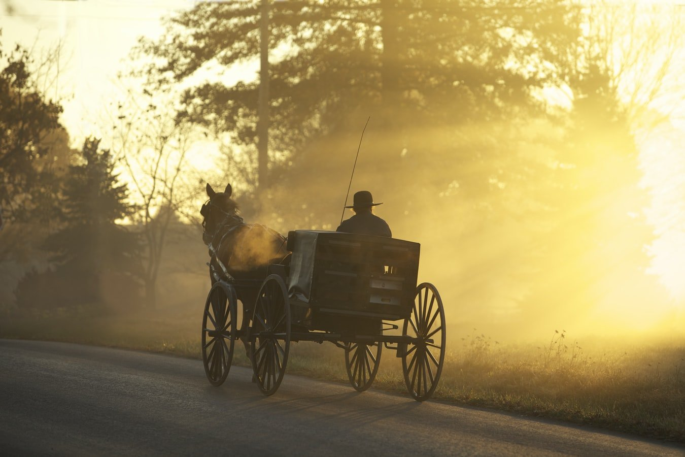 A man riding a carriage on the road.   Photo: Unsplash/Randy Fath