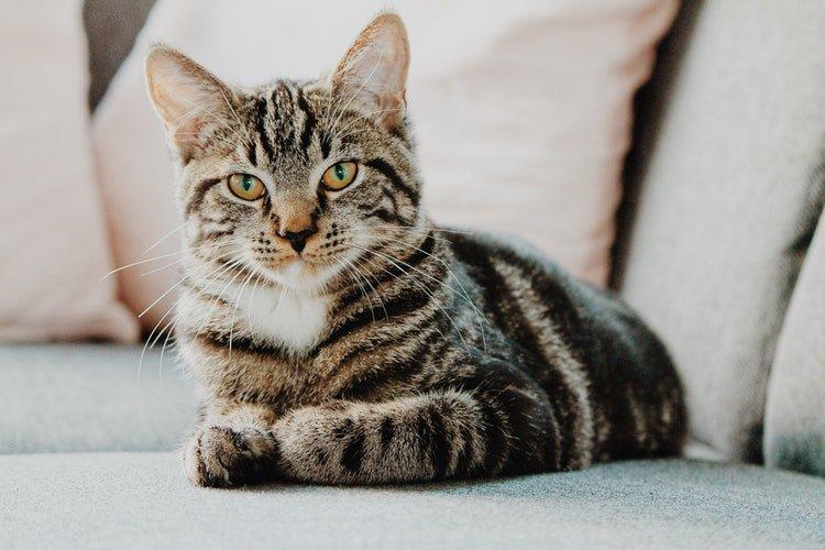 Un chat fixant le caméra | Photo / Unsplash