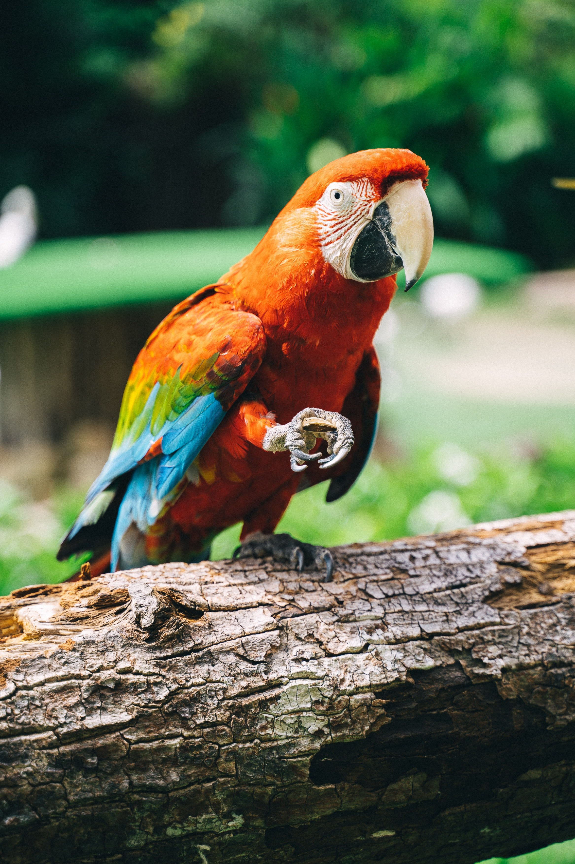 A parrot in the woods.   Photo: Pexels