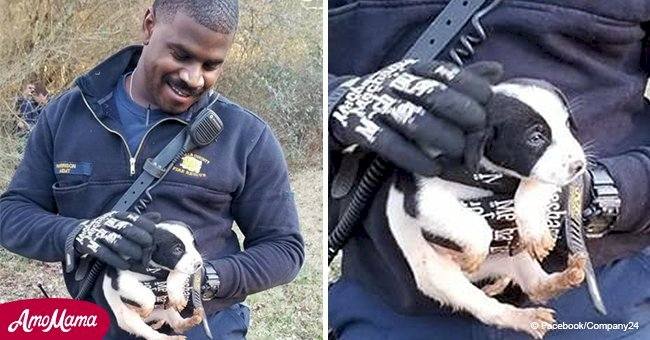 Brave firefighter rescues puppy stranded on the bank of a pond and decides to adopt him