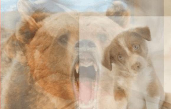 El perro y el oso entre los animales. | Imagen: YouTube / Lo Mas Trending