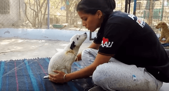 Welpe im Heim | Quelle: YouTube / Animal Aid Unlimited, India