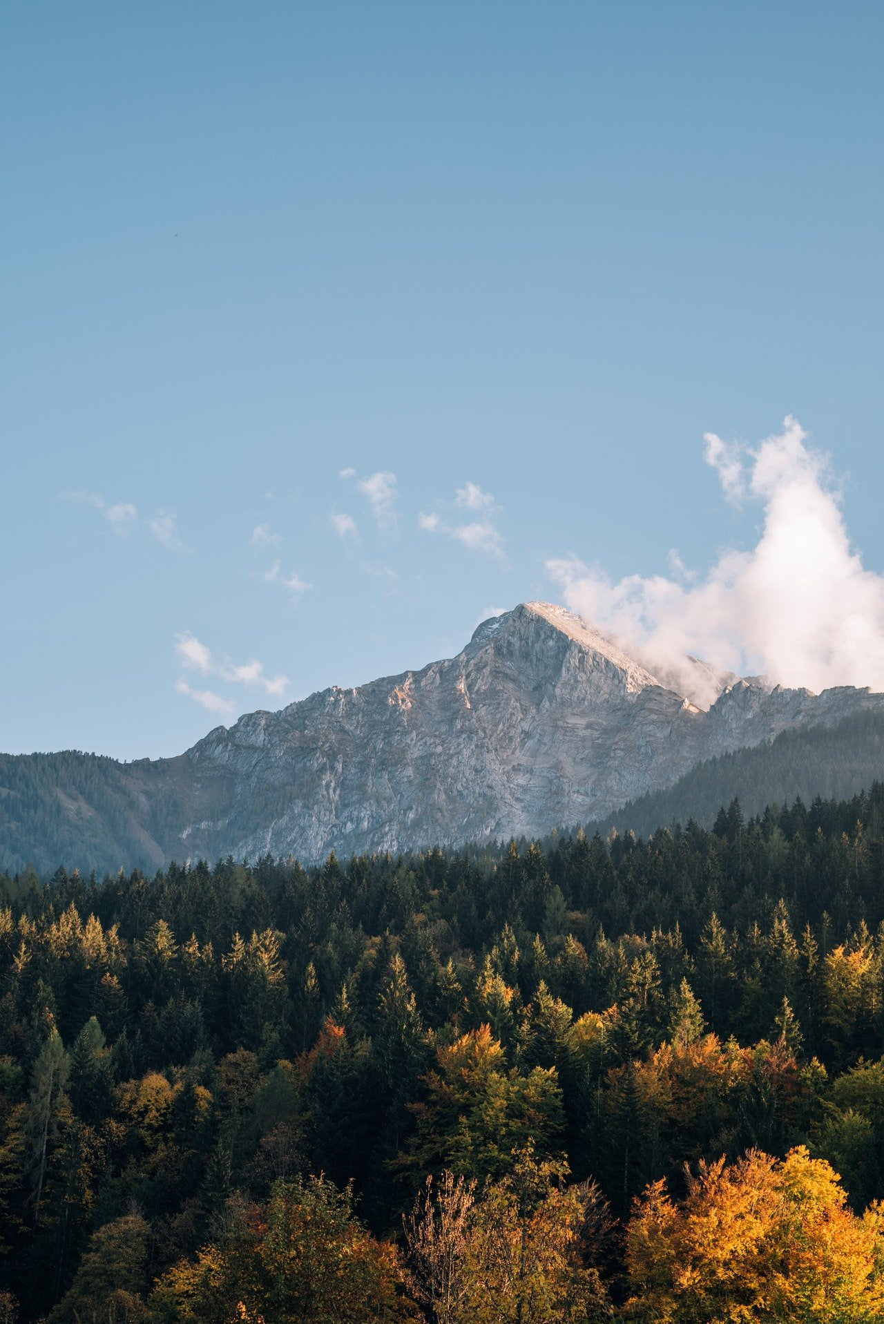 Photo of a mountain behind lush evergreen forest | Photo: Pexels