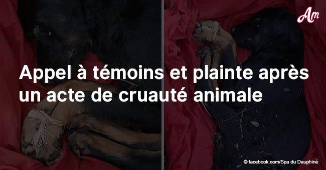Isère: Un appel à témoins après qu'un chien ait été découvert avec les pattes attachées