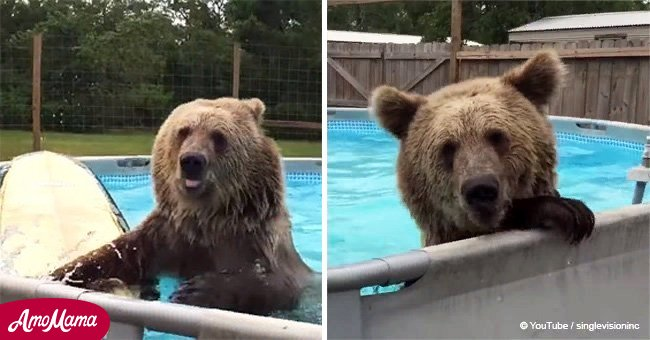 Grizzly bear does belly flops in the pool and 'smiled' for the camera
