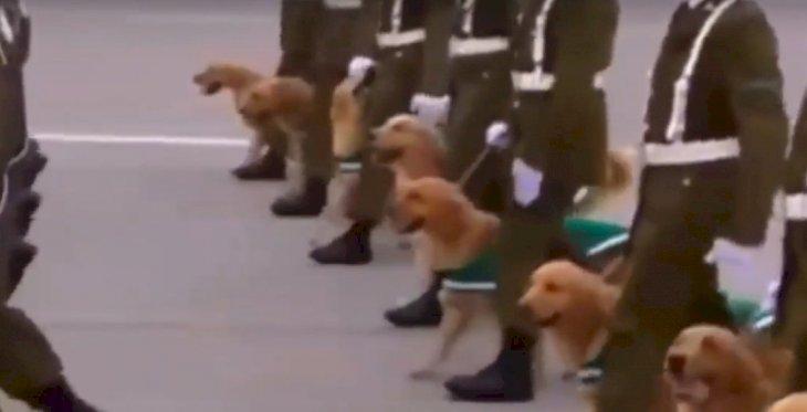 Screenshot/Parade | Quelle: YouTube