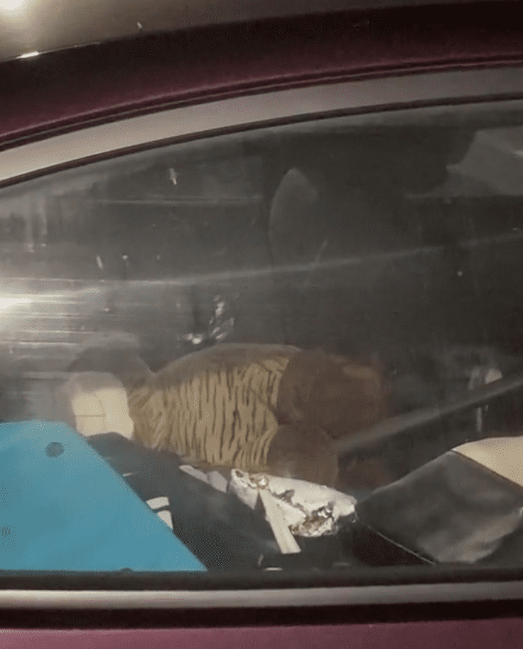A TikToker shows viewers the inside of an Uber Eats delivery car that is cluttered and crawling with roaches | Photo: TikTok/iamjordanlive