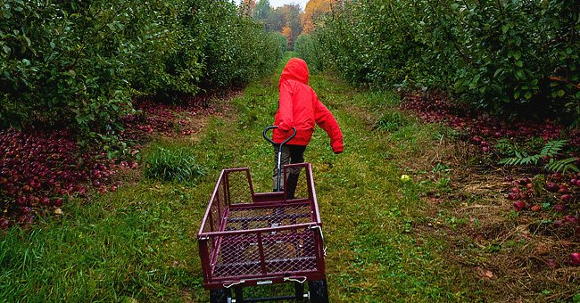 Daily Joke: Little Johnny Was Pulling His Wagon up the Hill in a Foul Mood