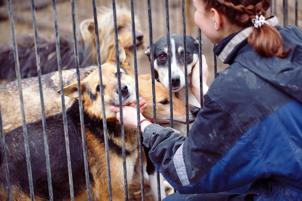 Frau streichelt Hunde hinter Gitter | Quelle: Shutterstock