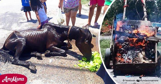 Des voisins sauvent un cheval terriblement mal nourri qui tirait une calèche et après l'avoir libéré, ils la brûlent