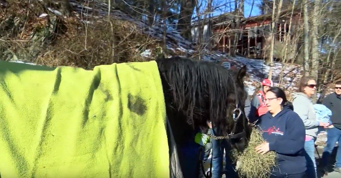 One of the rescued horses covered with a blanket and being fed after rescue attempt proved successful | Photo: YouTube / KETKnbc