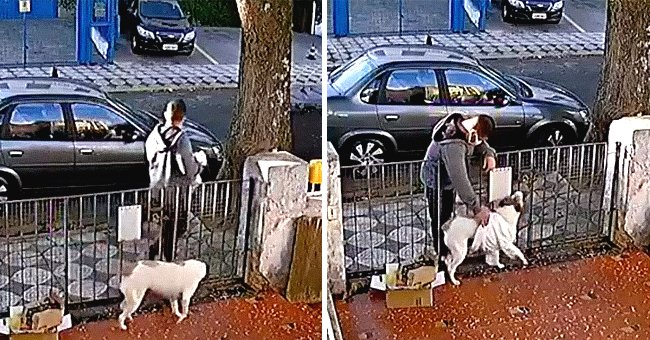 Man Pets a Stranger's Dog and Makes Unexpected Move